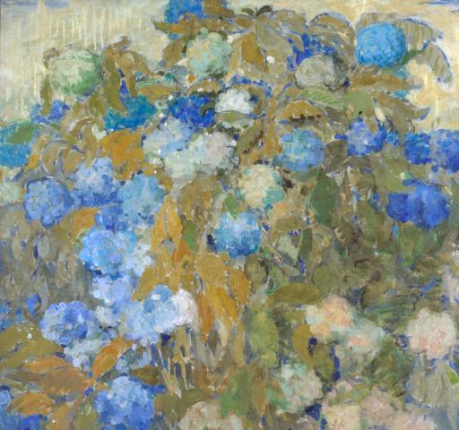 Голубые гортензии